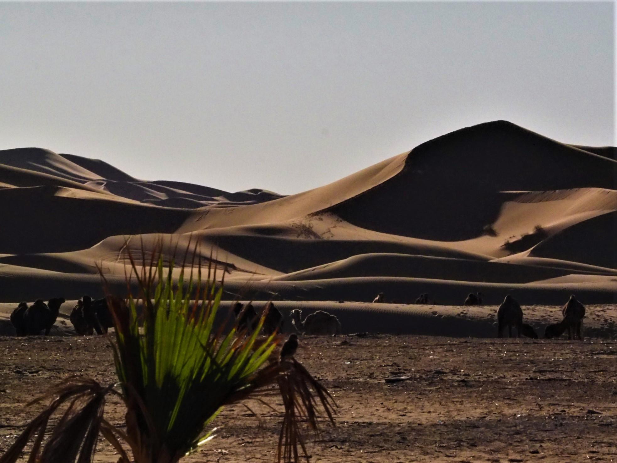 Notte nel deserto a Merzouga - annavagabonda